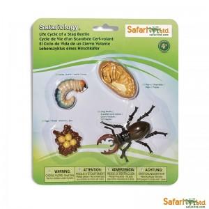 Жизненный цикл жука-оленя (рогач) Safari Ltd 661416