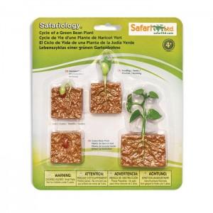 Жизненный цикл зеленой фасолины Safari Ltd 662416