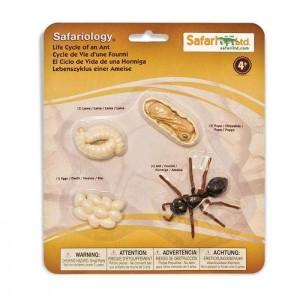 Жизненный цикл муравья Safari Ltd 663916