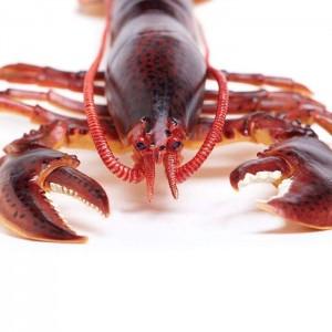 Американский омар (лобстер) XL Safari Ltd 281629